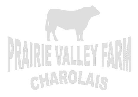 Prairie Valley Farm Charolais Bulls platte south dakota